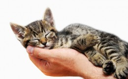 Kitty sleeping in arms